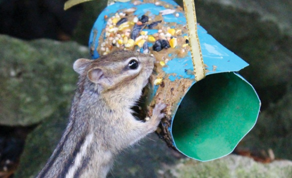 tube seed feeder crafts binoculars